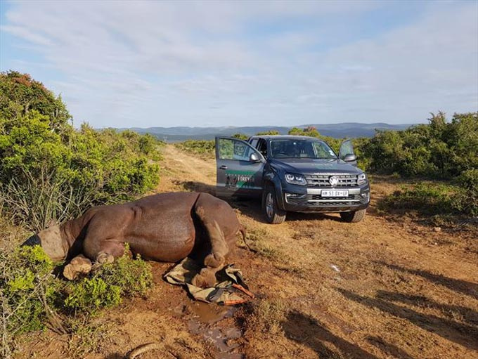 The fight against rhino poaching continues