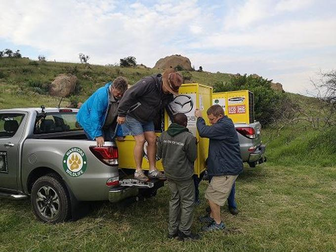 Mazda Foundation Southern Africa supports lion relocation