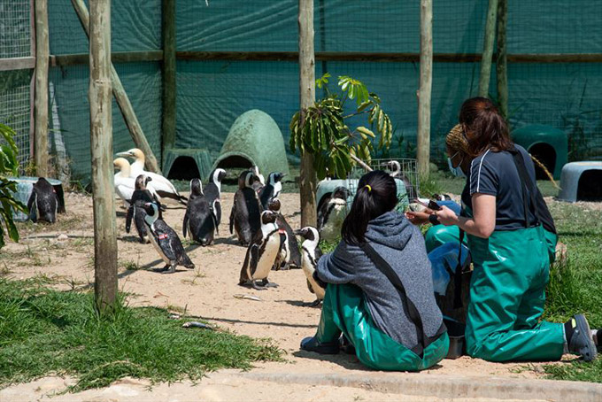 """SANCCOB Port Elizabeth does important work all along the Eastern Cape coast rescuing and rehabilitating African penguins and seabirds."