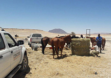 InServe companies come to the aid of the wild horses of Namibia